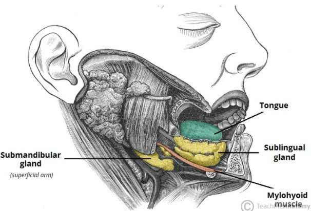sublingual glands causes, treatment